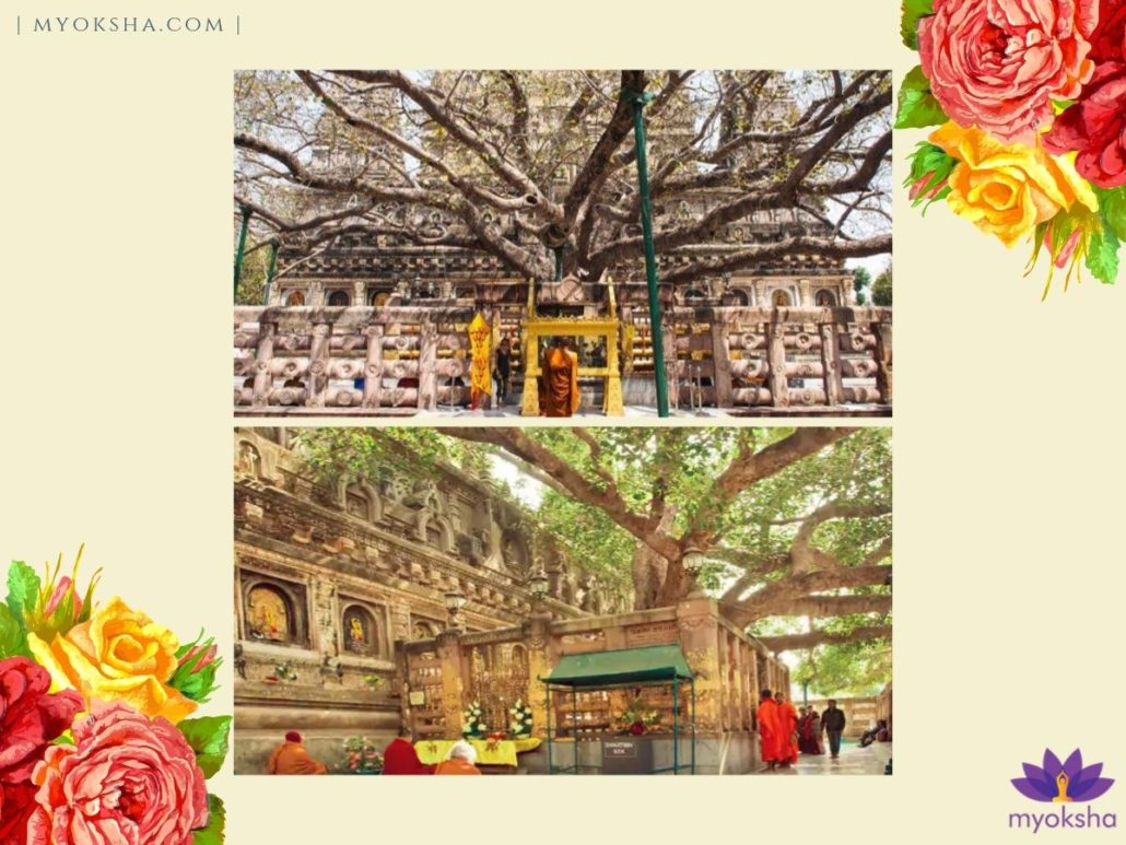 Bodhi Tree Mahabodhi Temple Bodh Gaya