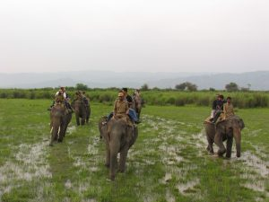 Kaziranga Elephant Ride
